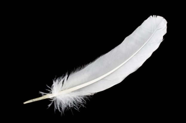 white feather 2